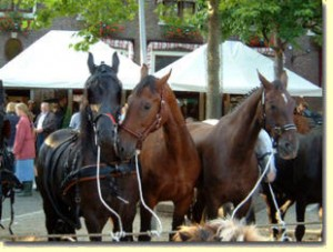 paarden3
