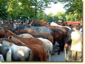 paarden5