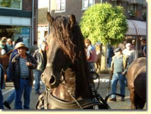 paarden6
